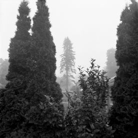 figures in the mist. bridgeport, ct.