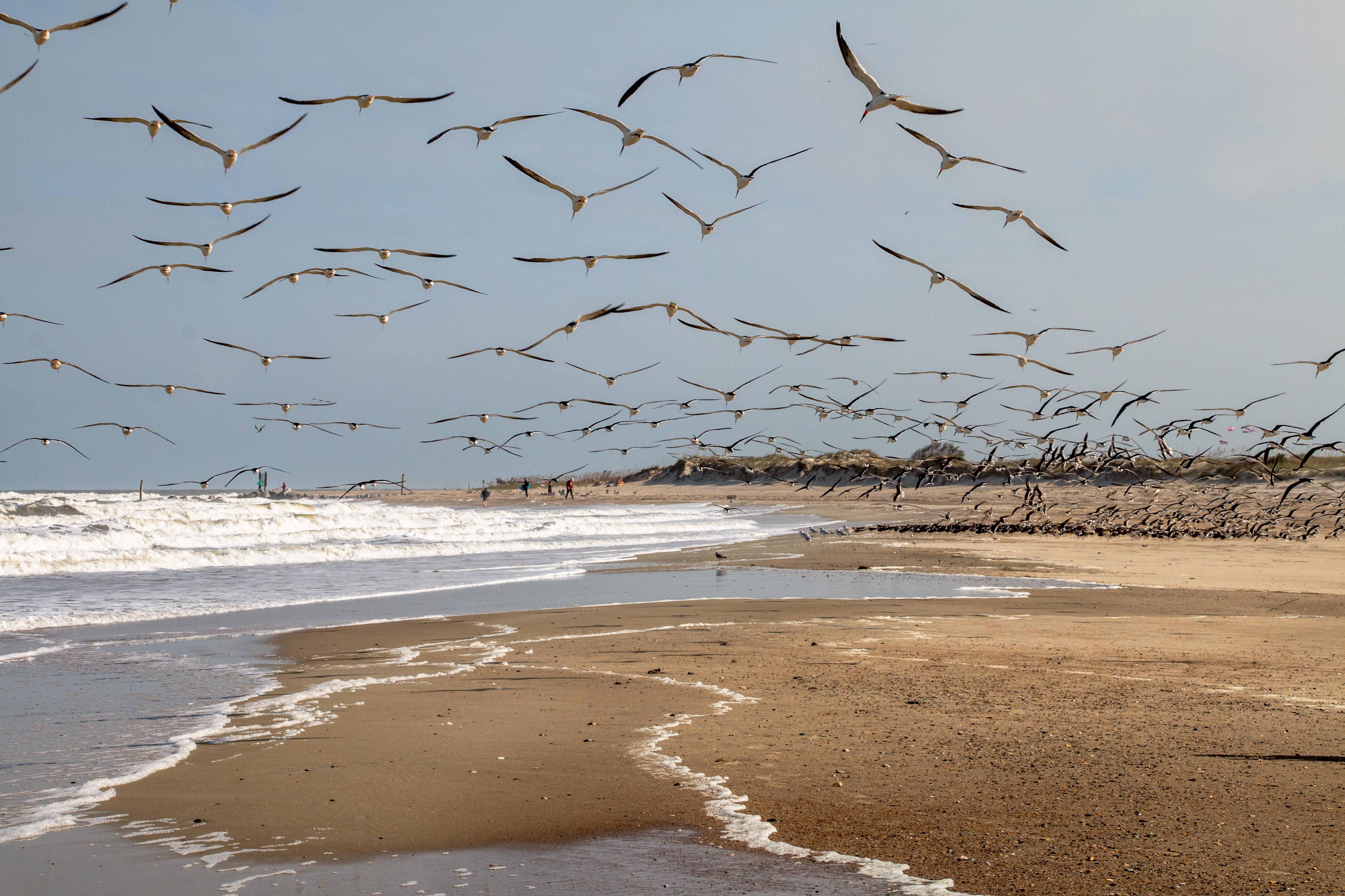 Beach Birds 3