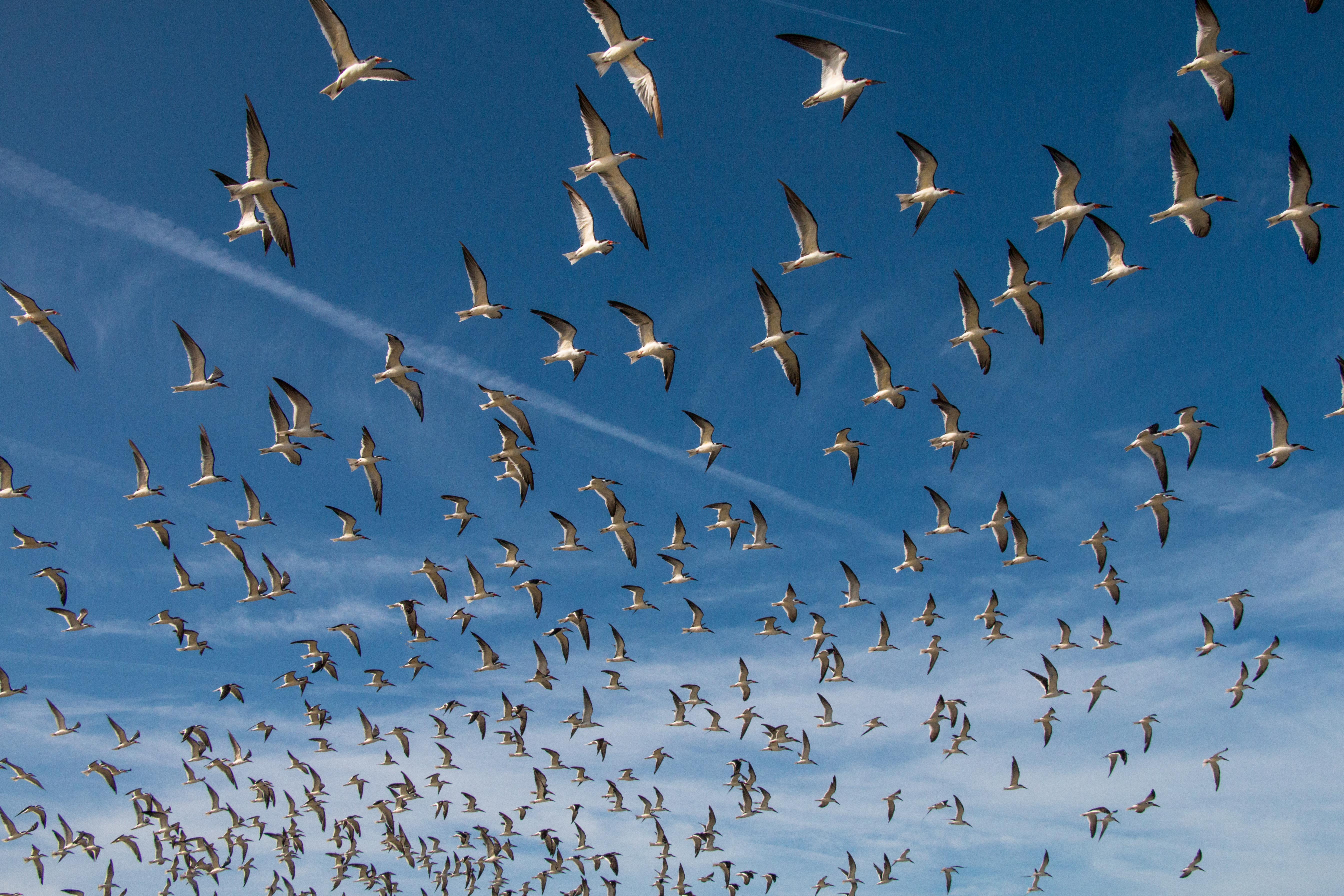 Beach Birds 2