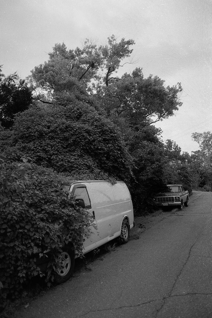 overgrown. north carolina.