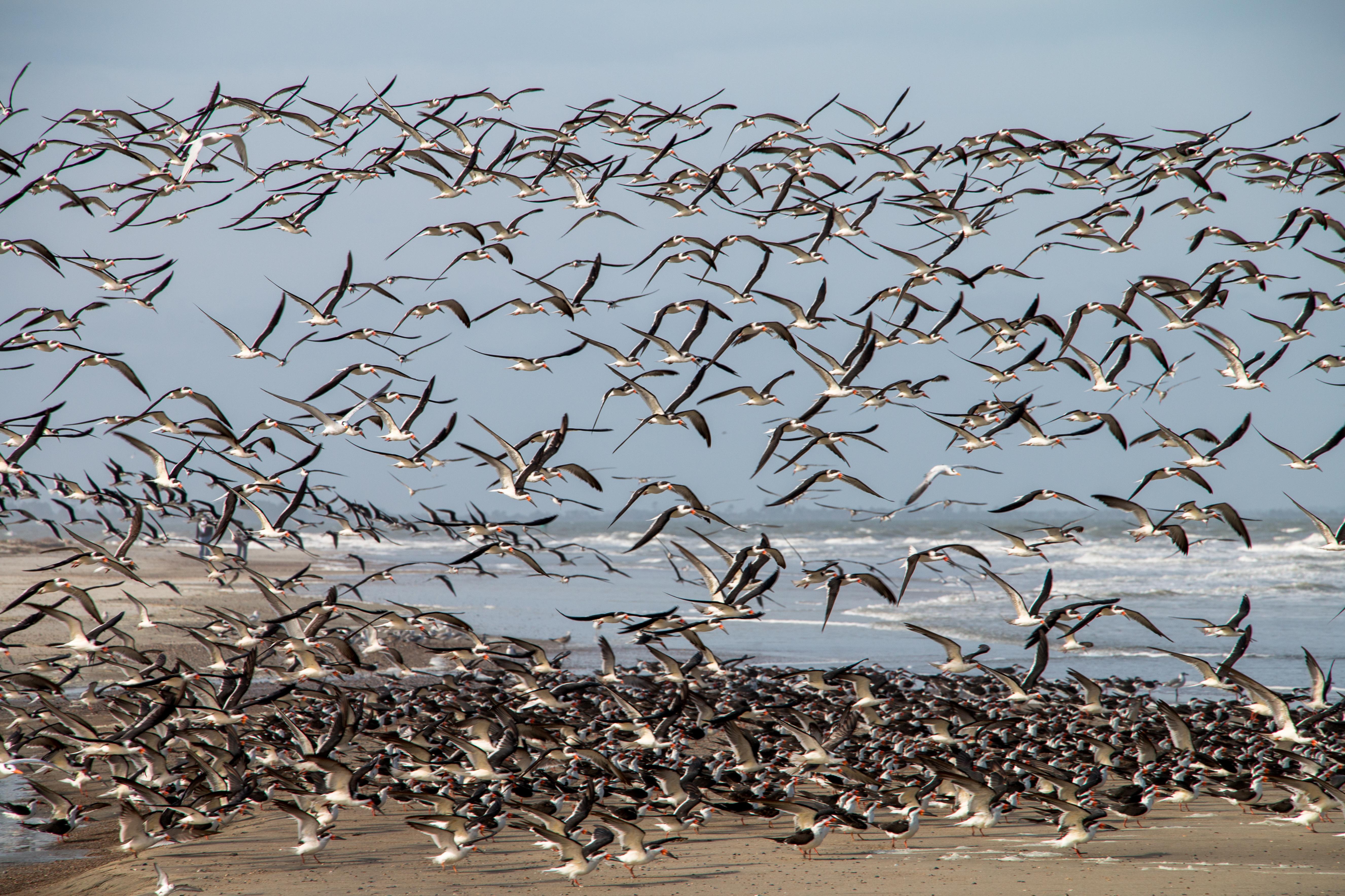 Beach Birds 5