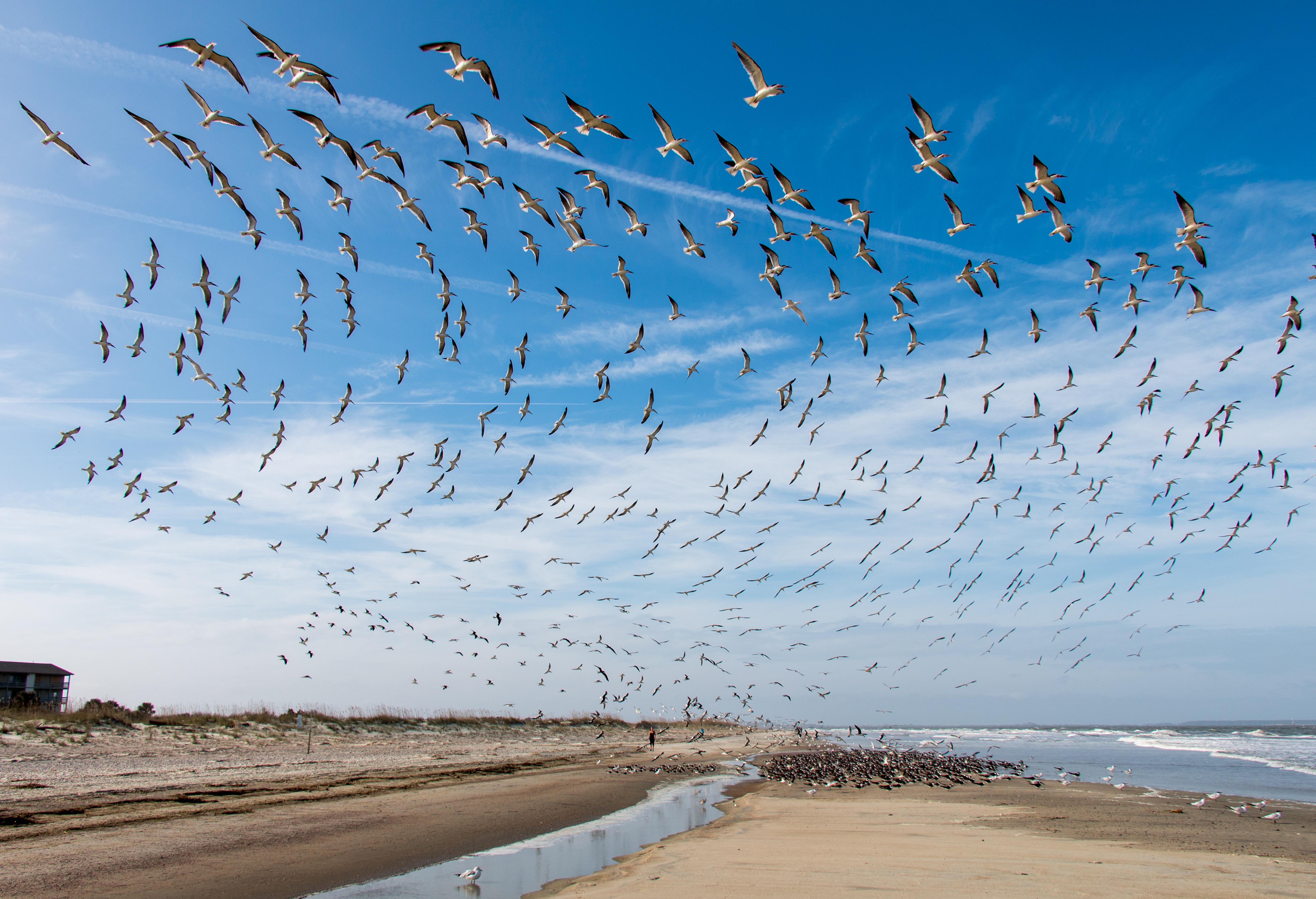Beach Birds 1