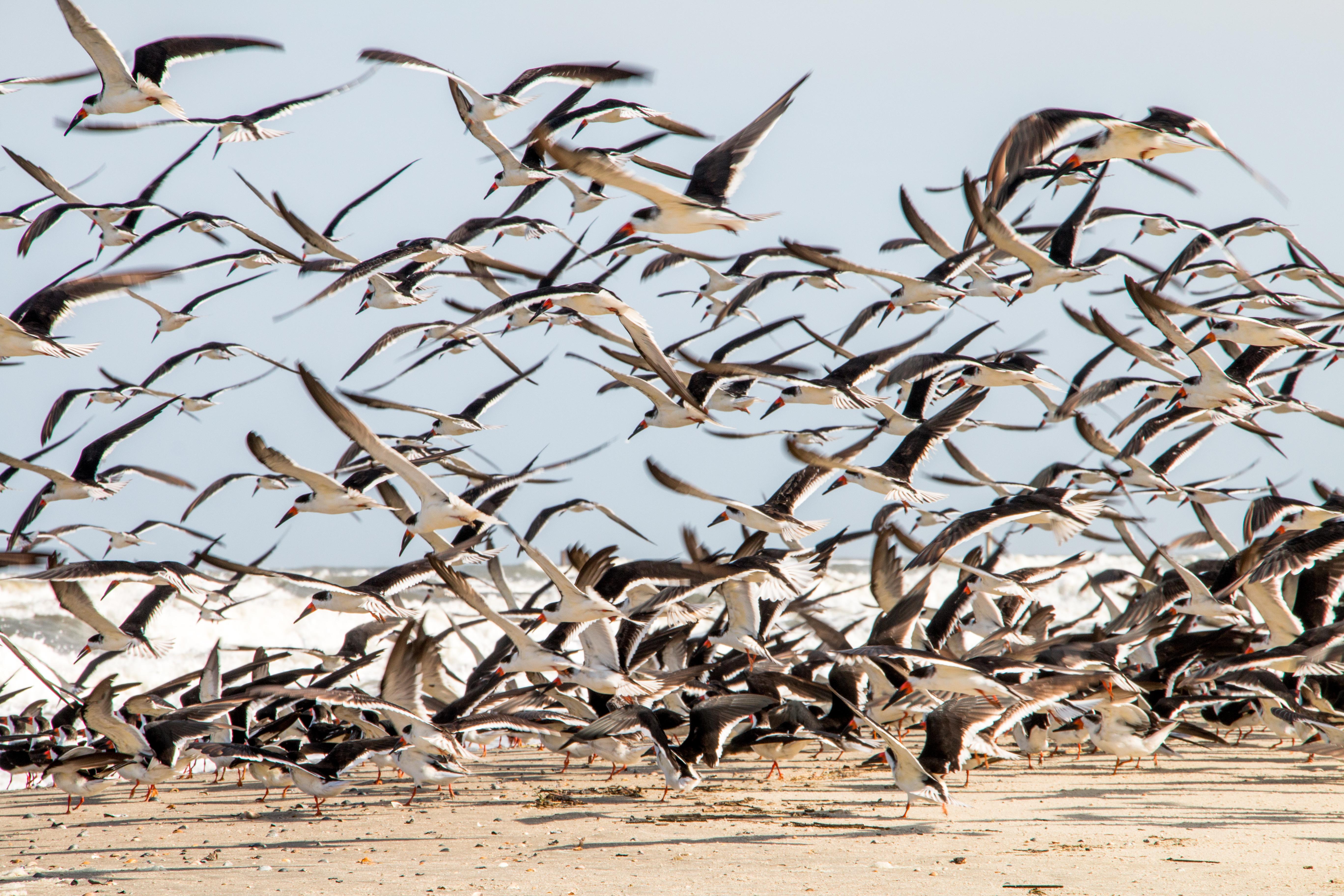 Beach Birds 4