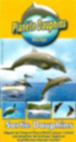 Sortie dauphins Martinique avec Planète dauphins