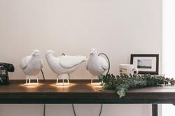 Dove X Light 鴿子燈