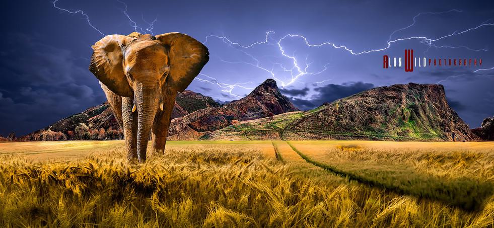 Arthurs elephant.jpg