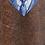 Thumbnail: ARCHETYPE  THE MASTER TORO