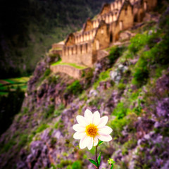 A Flower amongst the Ruins