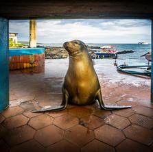 Missy Sea Lion