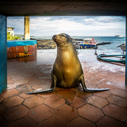 Missy Sea Lion