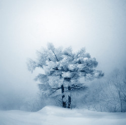 White Beauty - Vol I