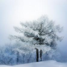 White Beauty - Vol II