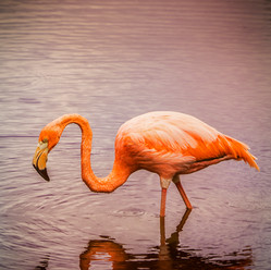 Pretty Flamingo #2