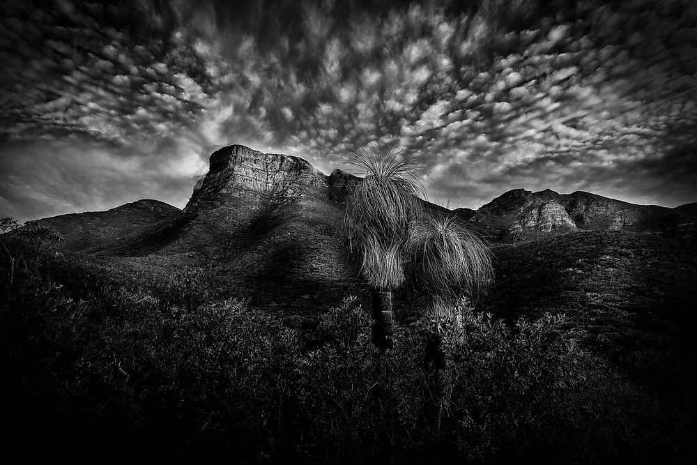 "This image was taken in Nov 2018 on my trip through the Great Southern region, including the stunning Stirling Ranges National Park. Bular Mial is the local Noongar name for Bluff Knoll, meaning ""many eyes"" and the day I was there, the mountain was getting buffered by incredibly strong winds (so strong it pushed me over a couple of times). The winds brought some stunning cloud formations over the mountain throughout the 2-3hours I was photographing it. The ancestral spirit of the mountain was certainly alive and well that afternoon. This image of Bluff Knoll here, with the mountain scene in the background and the beautiful tall grasstrees in the foreground, really reminds me of a classic scene from Jurassic Park...can anyone see a T-Rex :-)"
