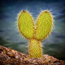 Tuneles Cactus