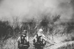 Cal Fire117