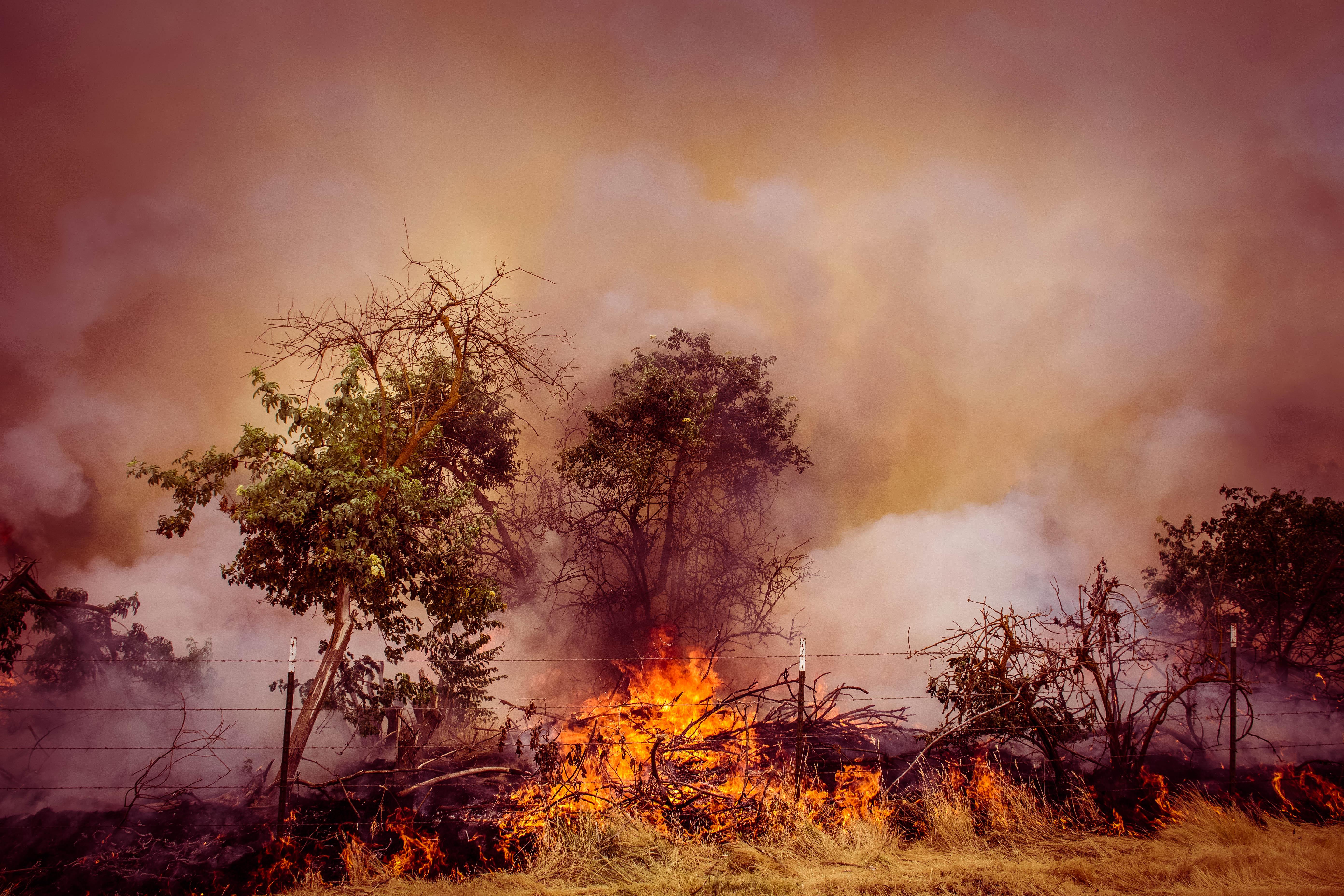 Cal Fire37