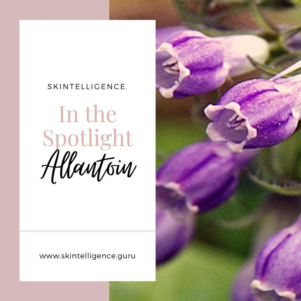 In the Spotlight: Allantoin   Skintelligence   Skincare blog