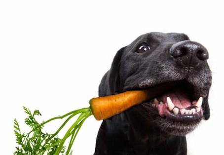 Receta de snack natural para entrenar a tu perro