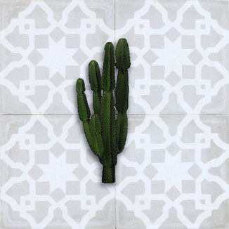 grand cactus fond pompon.jpg