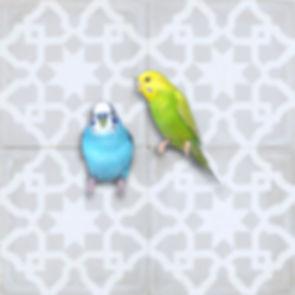 oiseaux fond pompon.jpg