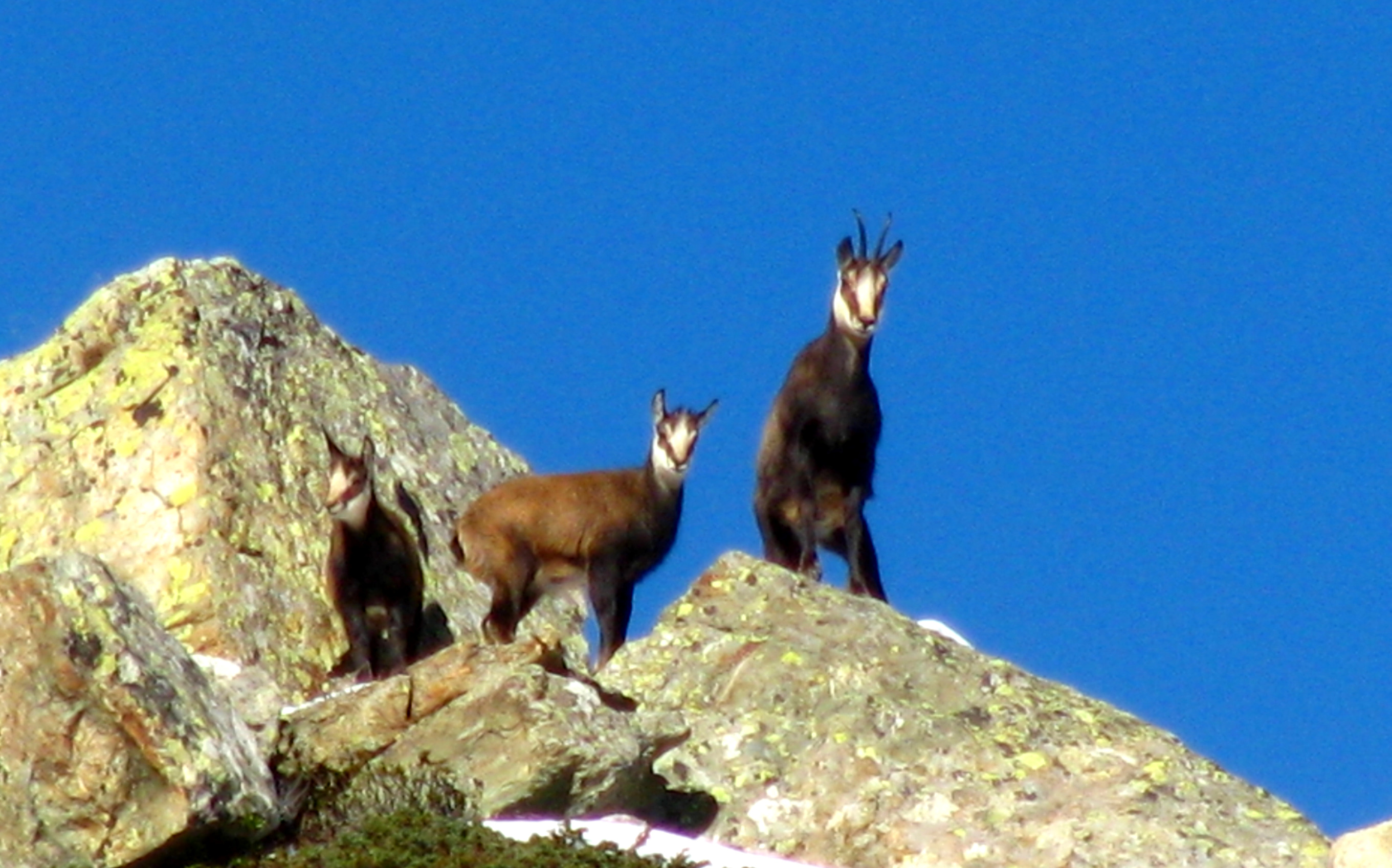 Photo © P. Morillon Horizons - Chamois & chevreau