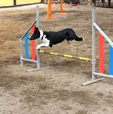 Спорт и выставки с собаками