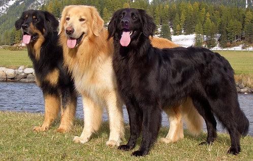 Ховаварт немецкая порода крупных рабочих сторожевых собак