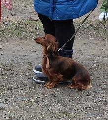 Дрессировка собак разных пород в Москве