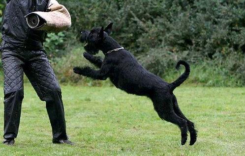 Ризеншнауцер немецкая порода крупных защитных собак