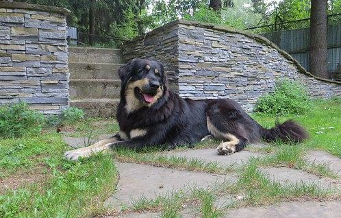 Хотошо российская порода больших охранных собак