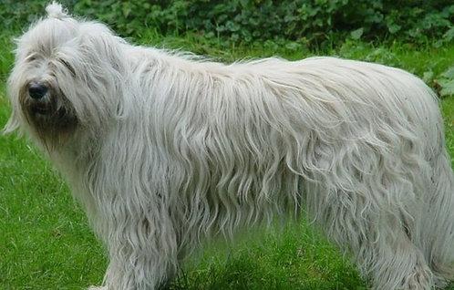 Южнорусская овчарка крупная порода сторожевых собак