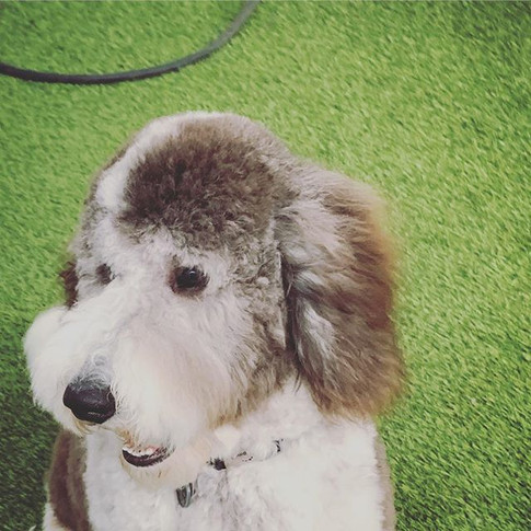 a great groom allows the pup's personali