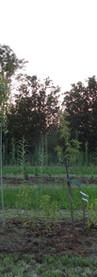 jwlp.nl-middelburg03