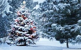 Christmas tree illumination / Illumination de l'Arbre de Noël
