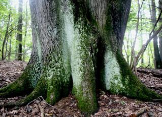 Choice of a Tree