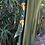 Thumbnail: Green/Gold Flora Stripe {Jungle Flow Pant}