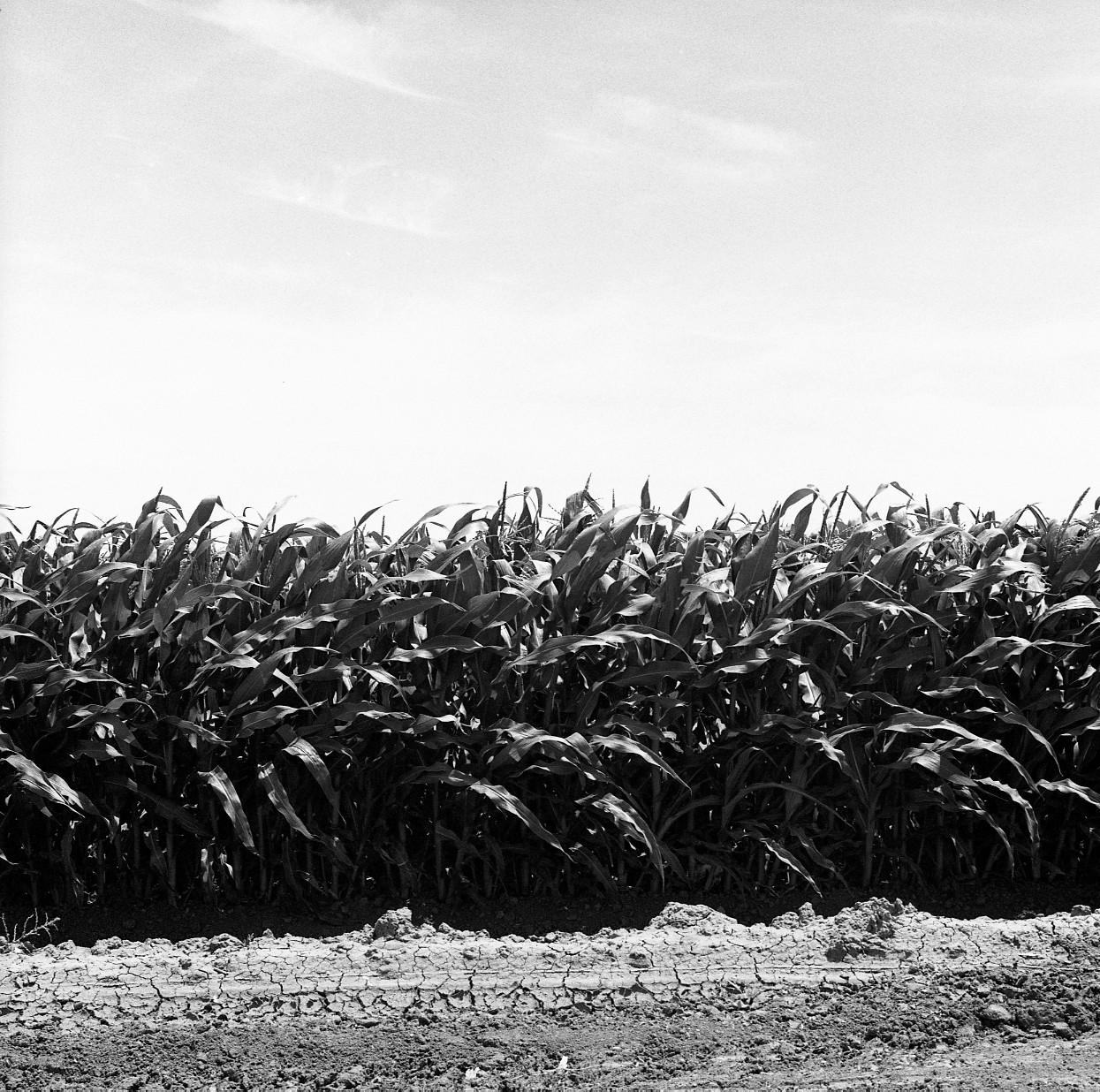 crops (clovis, ca)