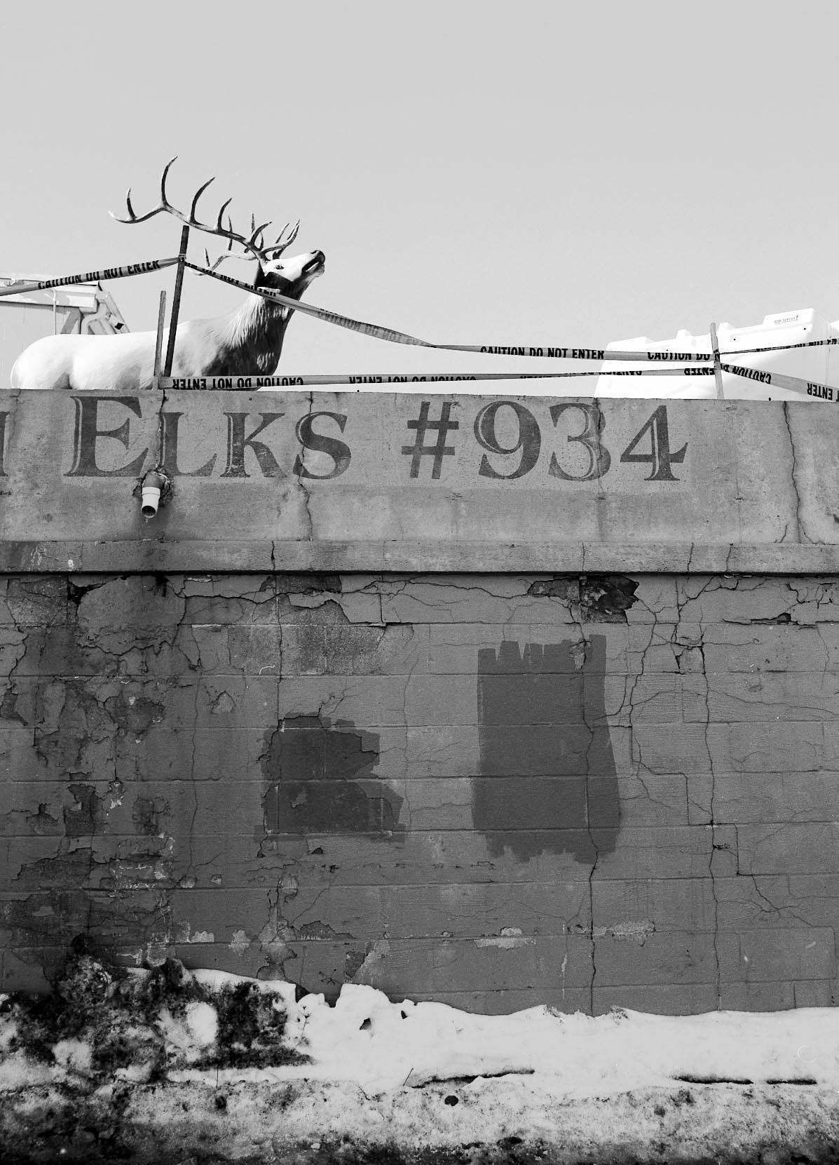 elks, 934