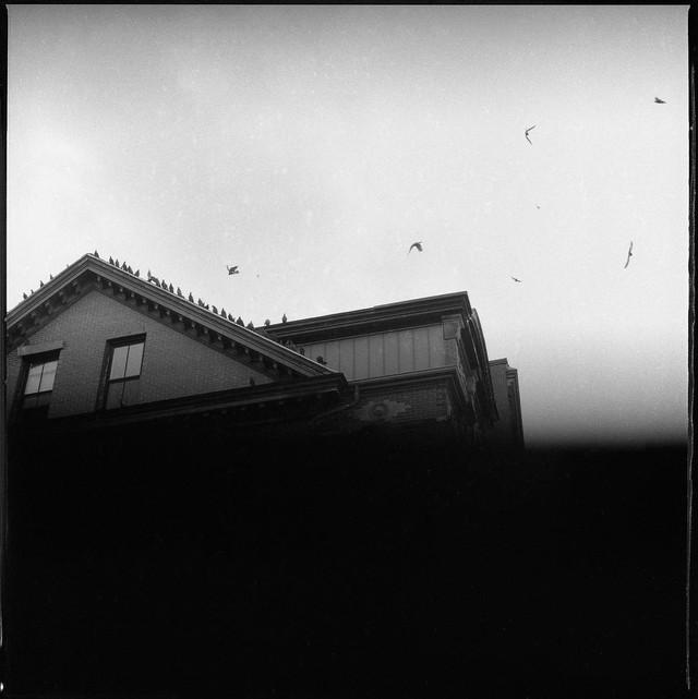 pigeons roosting (stuck shutter)
