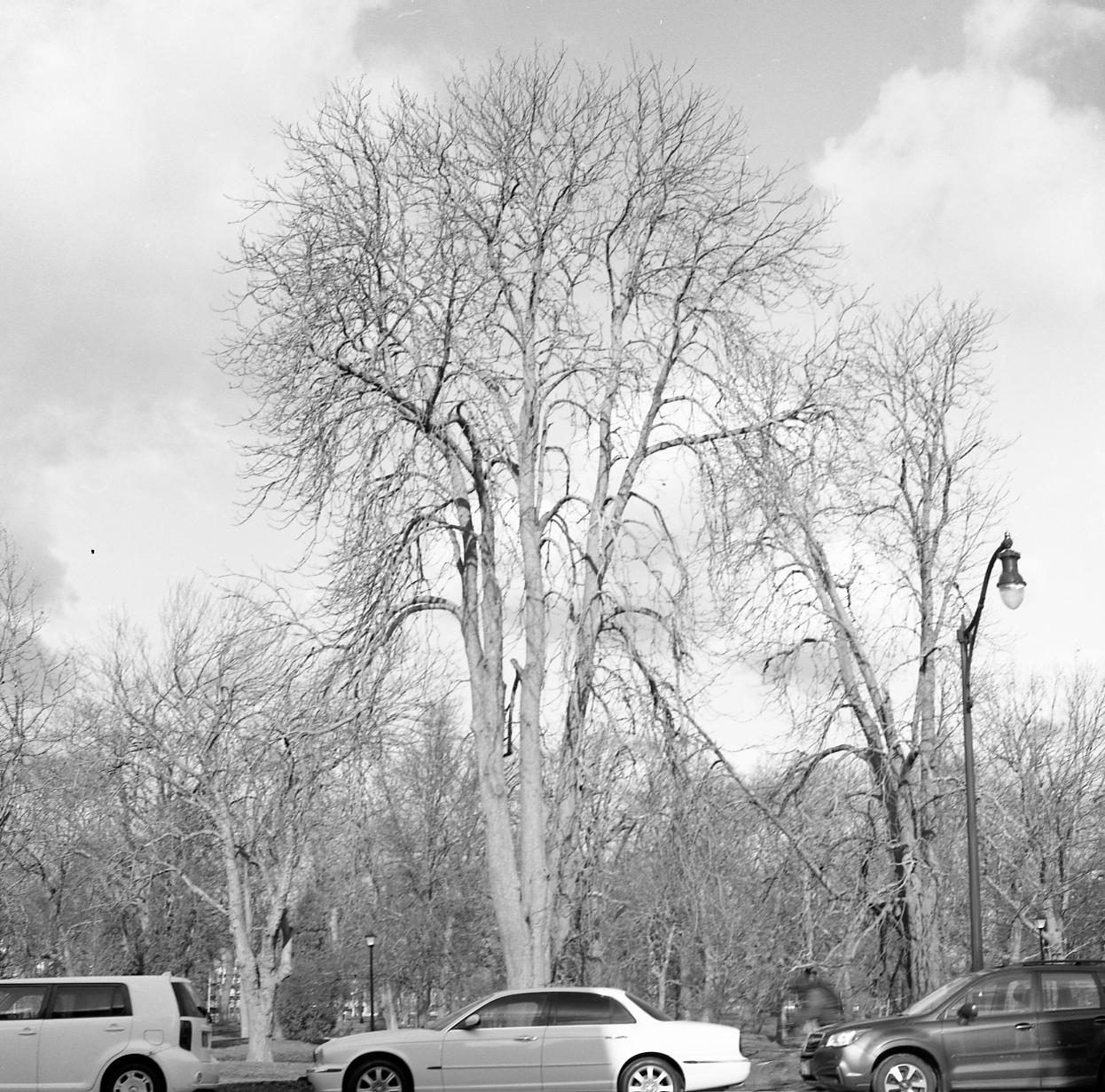 deering oaks 3 (bleach)