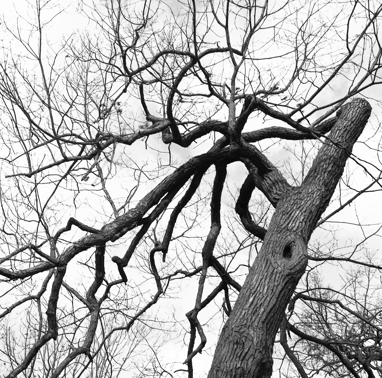 deering oaks 2 (twisted)