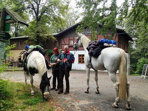 Hochsteinbaude Pferde