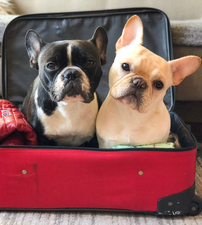 Traveling Internationally With Your Dogs