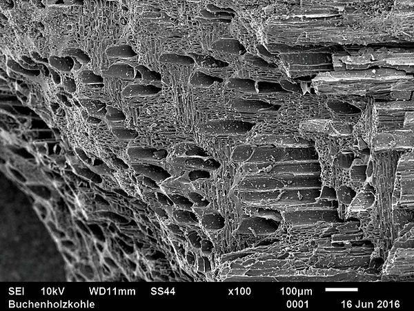 Rasterelektronische Mikroskopaufnahme von Pflanzenkohle aus Buchenholz. Die poröse Struktur ist gut zu erkennen. Foto: D. Kray