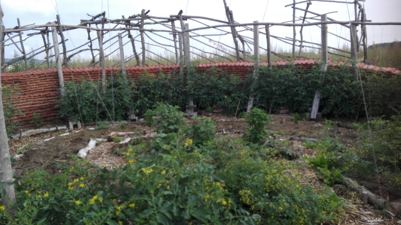 2020 Sonnenfalle mit Tomaten
