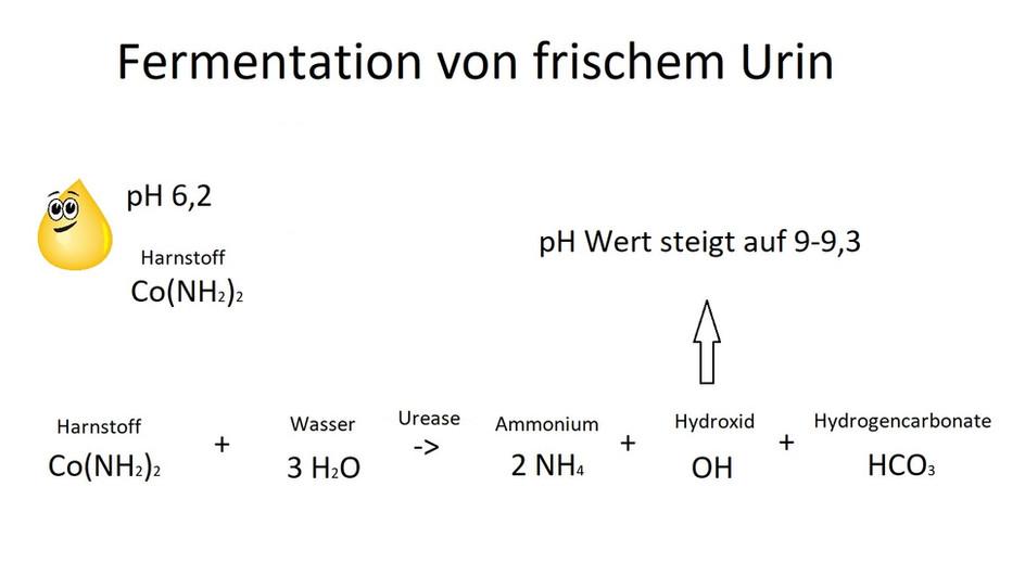 Das Fermentieren von Urin