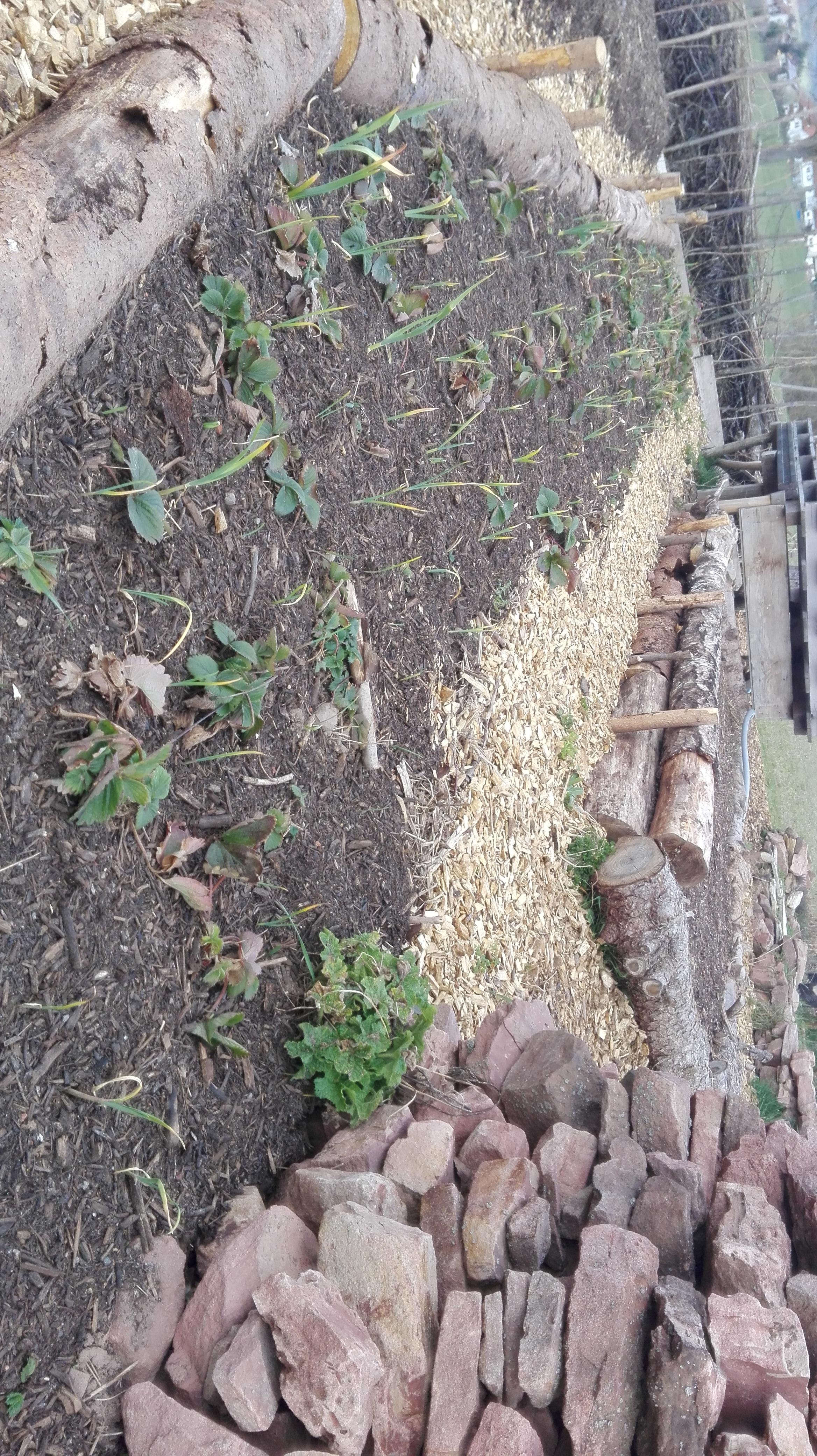 2021 April Pflanzen