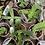 Thumbnail: Mini Succulents