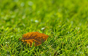 Fall_Lawn_Care_PNGWEB.png